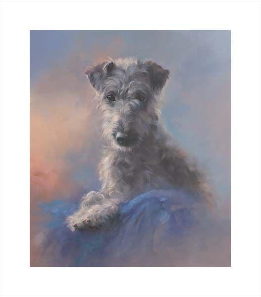 Dottie (Bedlington Terrier - Whippet Cross)