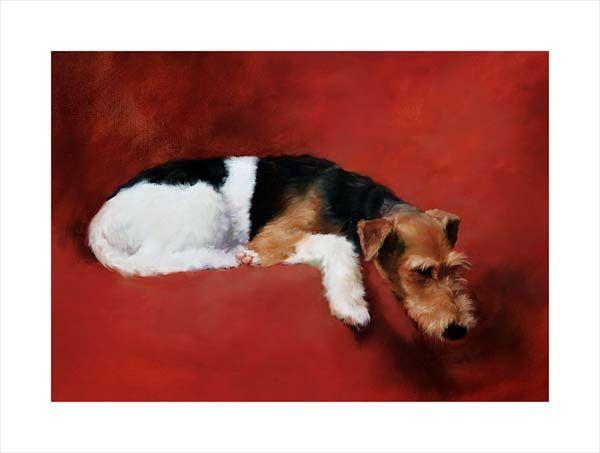 Freddie (Wire Fox Terrier)