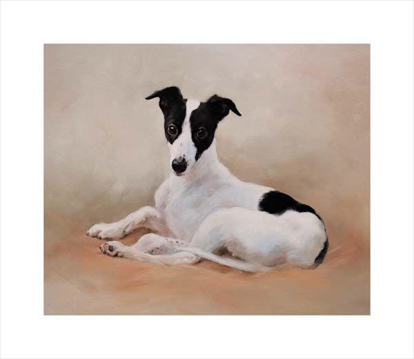 Little Jack (Greyhound Pup)
