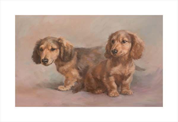 Miniature Long Haired Dachshund Pups